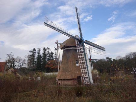 Hollands of buitenlands Riet